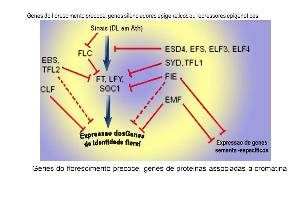 Genes do florescimento precoce: genes silenciadores epigeneticos ou repressores epigeneticos
