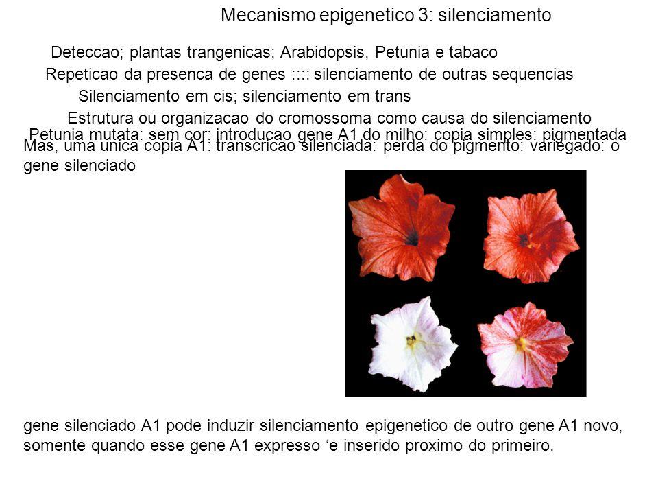 Mecanismo epigenetico 3: silenciamento