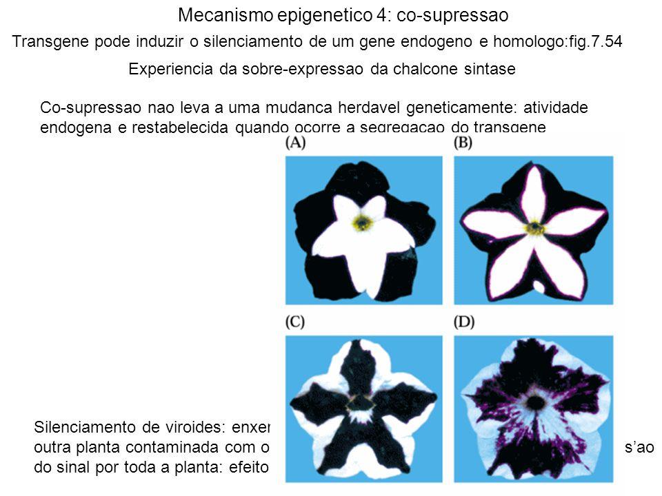 Mecanismo epigenetico 4: co-supressao