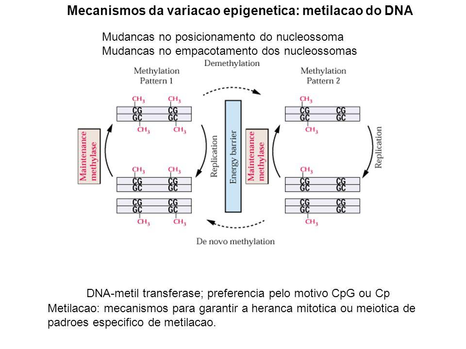 Mecanismos da variacao epigenetica: metilacao do DNA