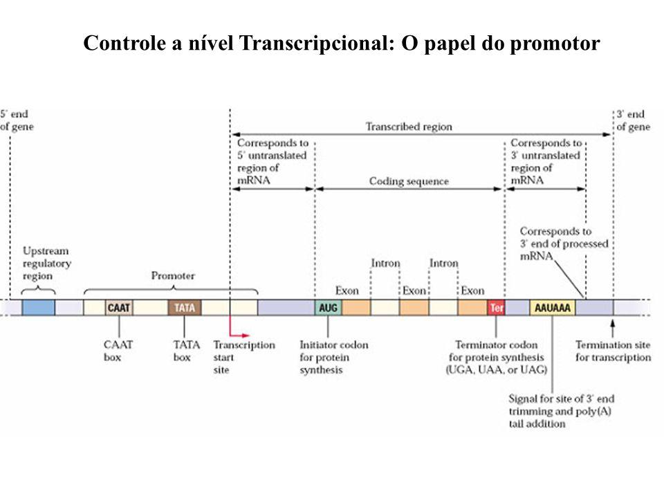 Controle a nível Transcripcional: O papel do promotor