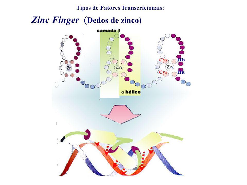 Zinc Finger (Dedos de zinco)