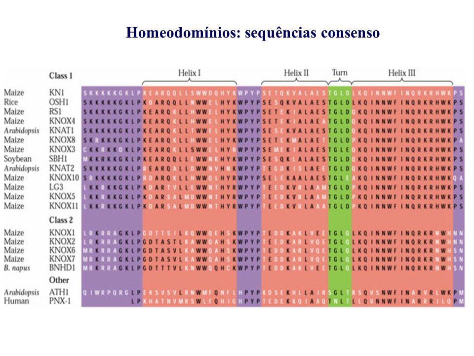 Homeodomínios: sequências consenso