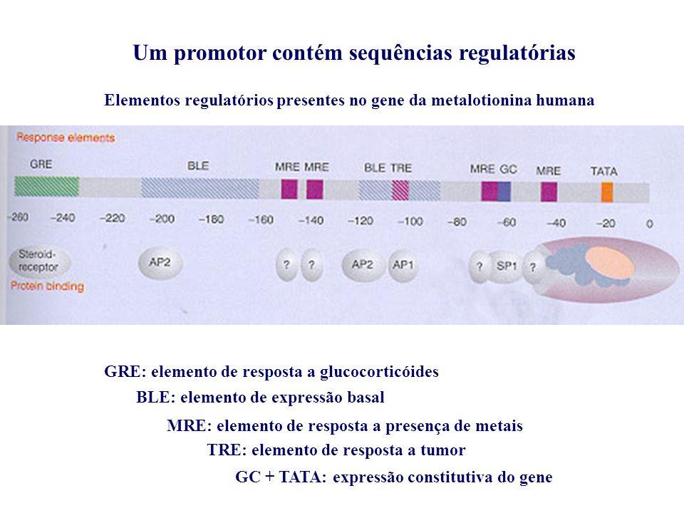 Um promotor contém sequências regulatórias
