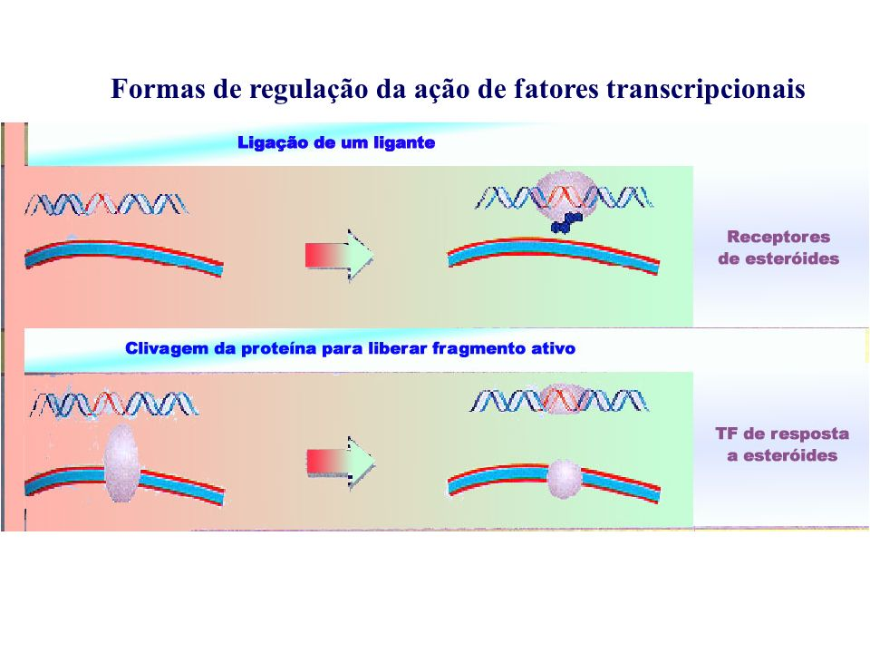 Formas de regulação da ação de fatores transcripcionais