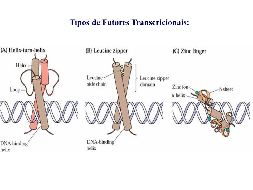 Tipos de Fatores Transcricionais: