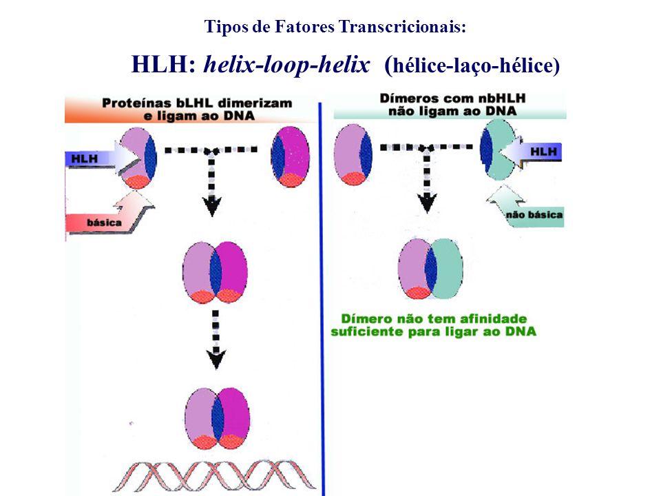 HLH: helix-loop-helix (hélice-laço-hélice)