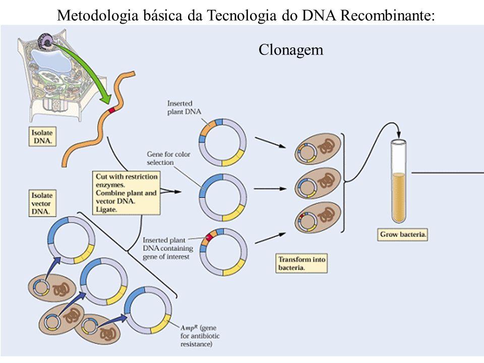Metodologia básica da Tecnologia do DNA Recombinante: