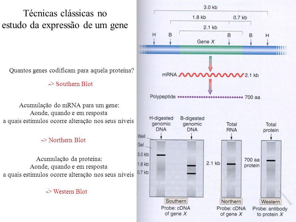 estudo da expressão de um gene