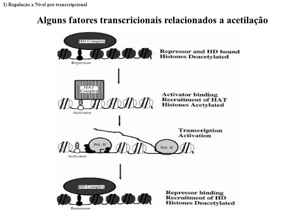 Alguns fatores transcricionais relacionados a acetilação