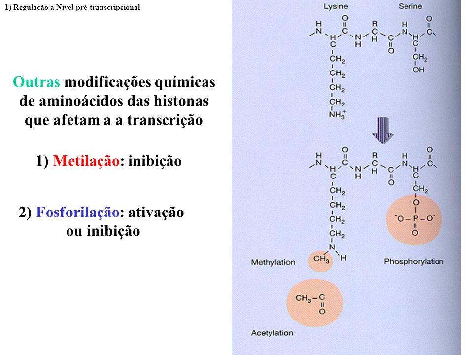 Outras modificações químicas de aminoácidos das histonas