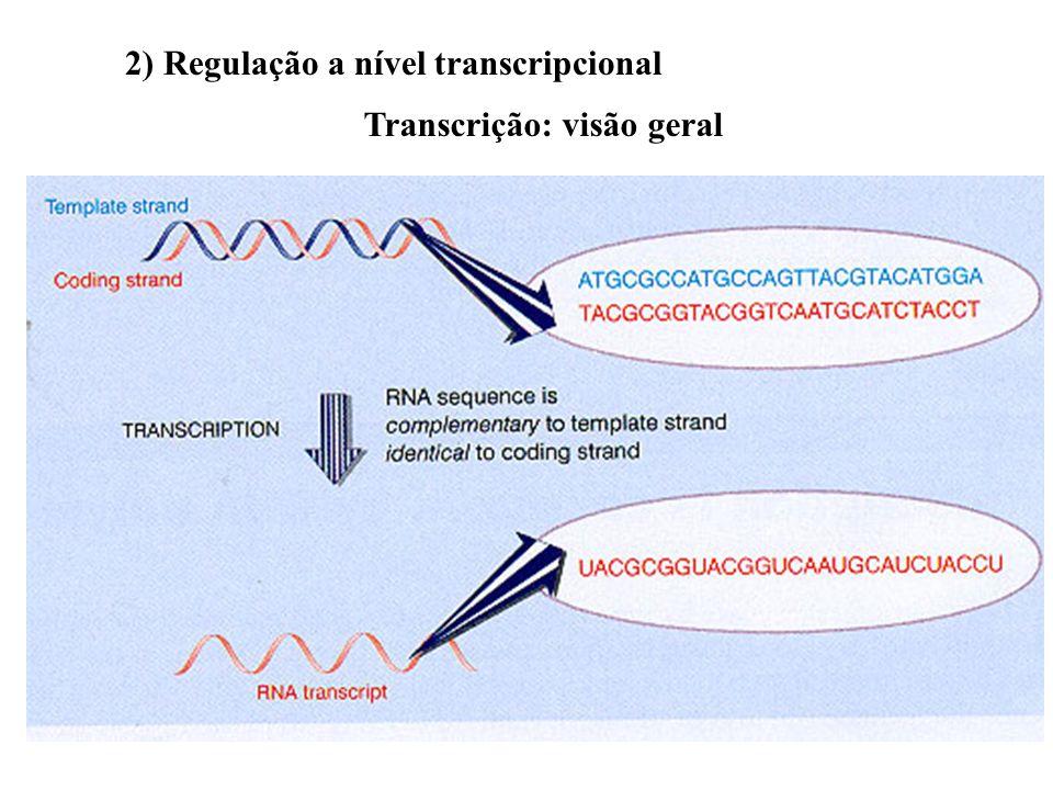 2) Regulação a nível transcripcional