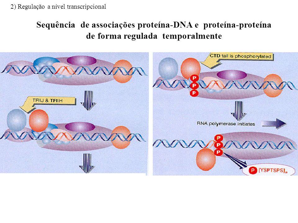 Sequência de associações proteína-DNA e proteína-proteína