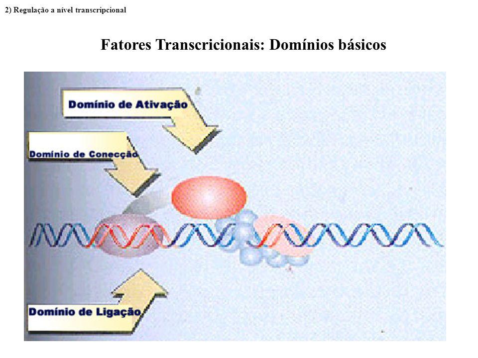 Fatores Transcricionais: Domínios básicos
