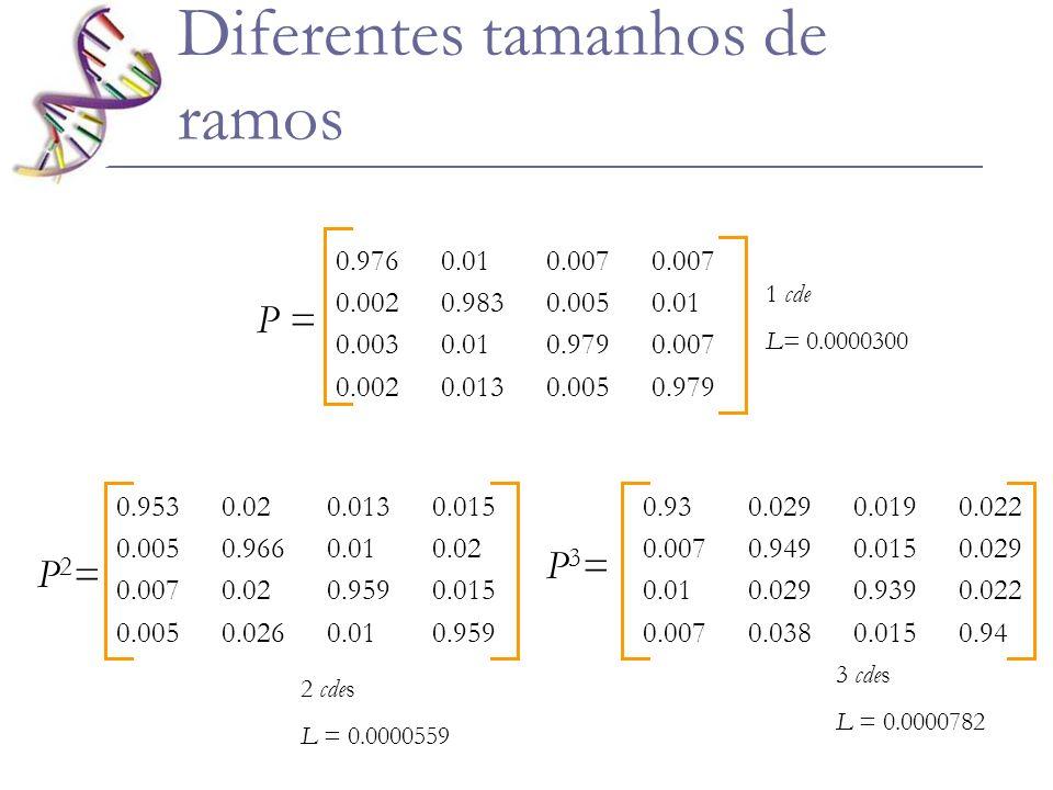 Diferentes tamanhos de ramos