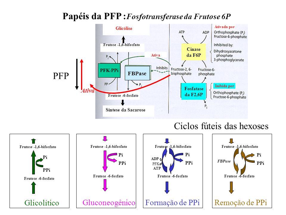 Papéis da PFP :Fosfotransferase da Frutose 6P