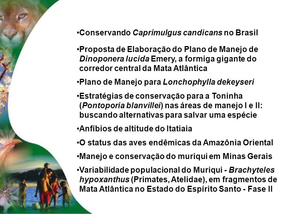 Conservando Caprimulgus candicans no Brasil