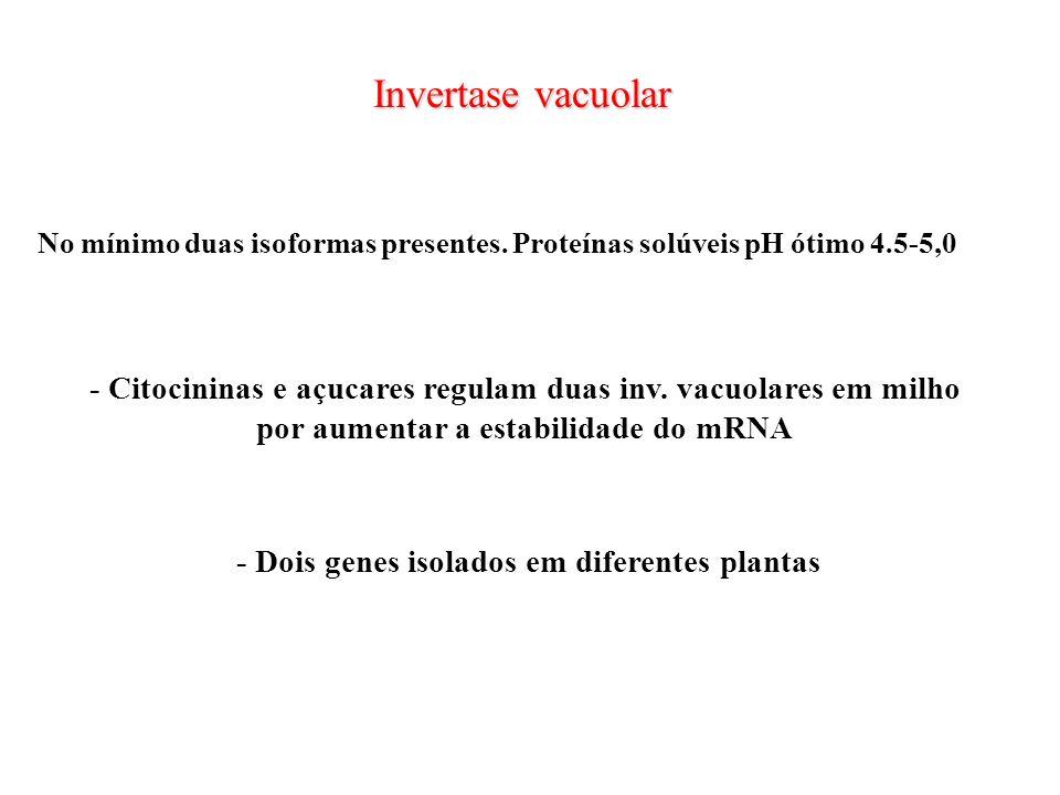 Invertase vacuolarNo mínimo duas isoformas presentes. Proteínas solúveis pH ótimo 4.5-5,0.