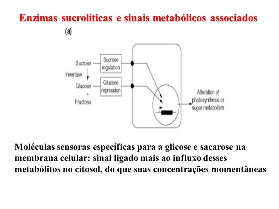 Enzimas sucrolíticas e sinais metabólicos associados