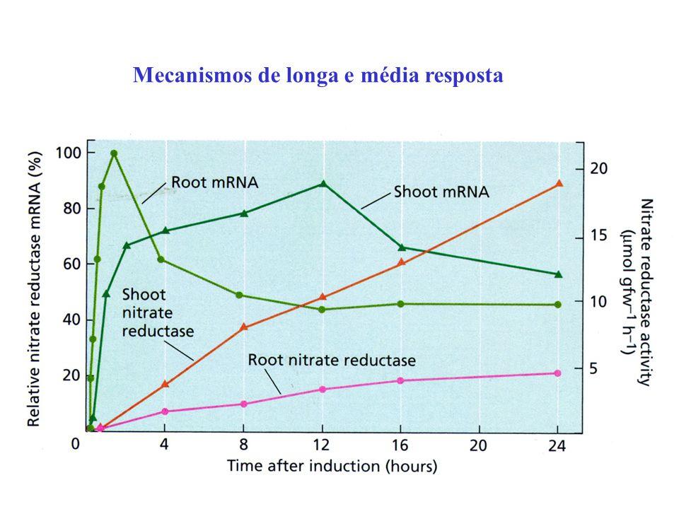 Mecanismos de longa e média resposta