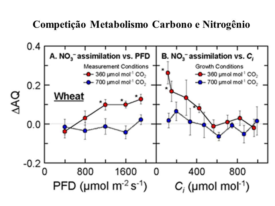 Competição Metabolismo Carbono e Nitrogênio