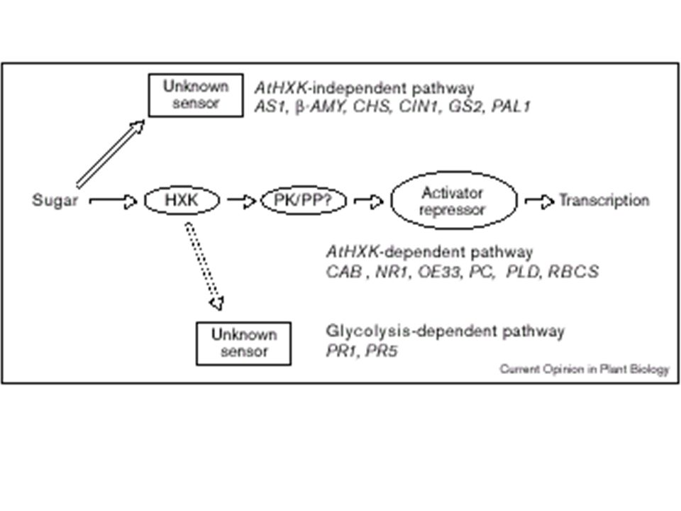Three glucose signal transduction pathways inplants