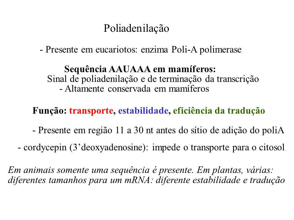 Poliadenilação - Presente em eucariotos: enzima Poli-A polimerase