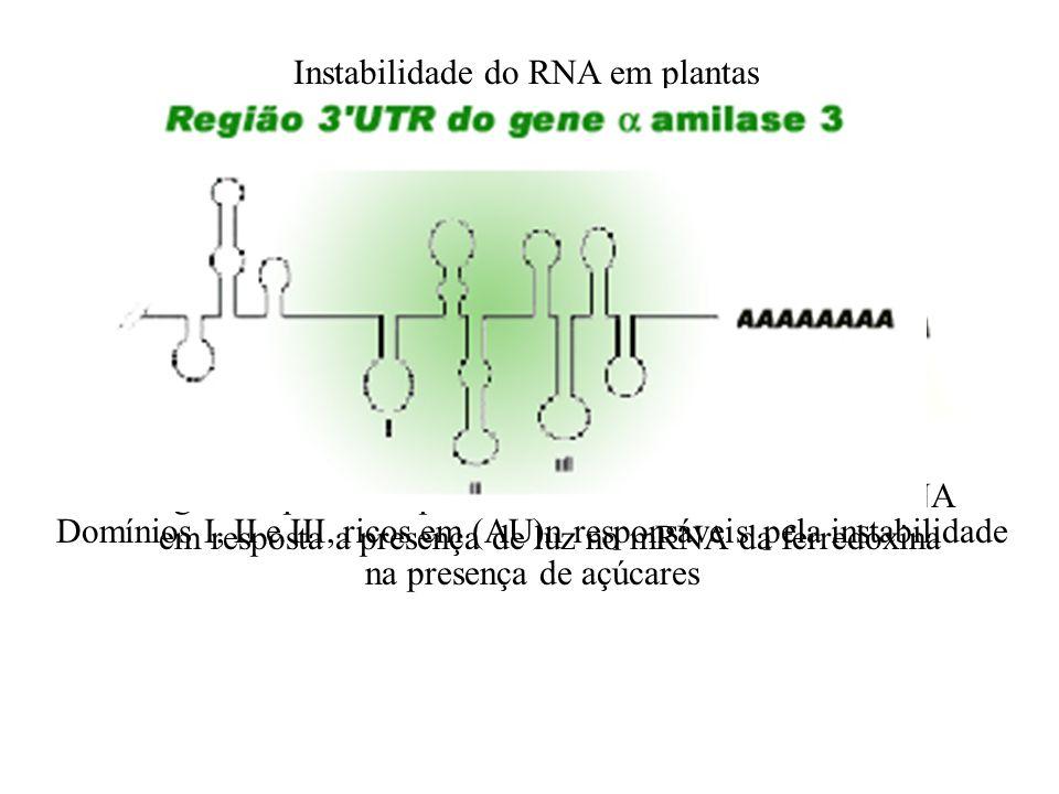 Instabilidade do RNA em plantas