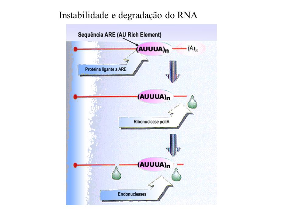 Instabilidade e degradação do RNA