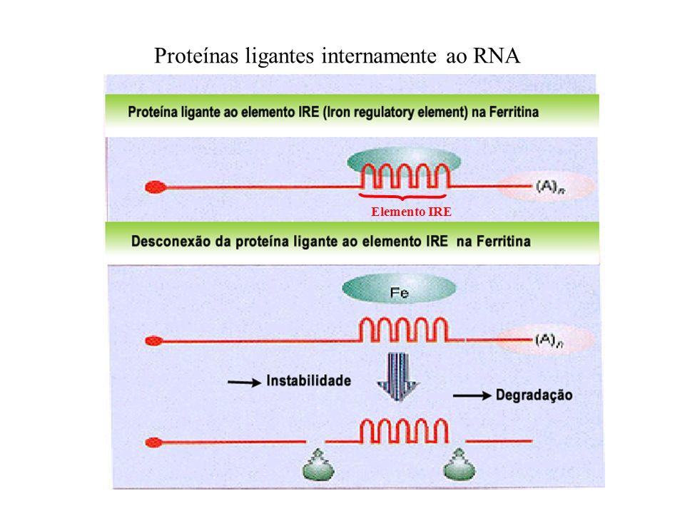 Proteínas ligantes internamente ao RNA