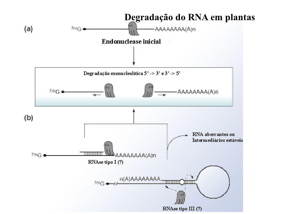 Degradação do RNA em plantas