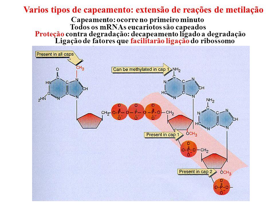 Varios tipos de capeamento: extensão de reações de metilação