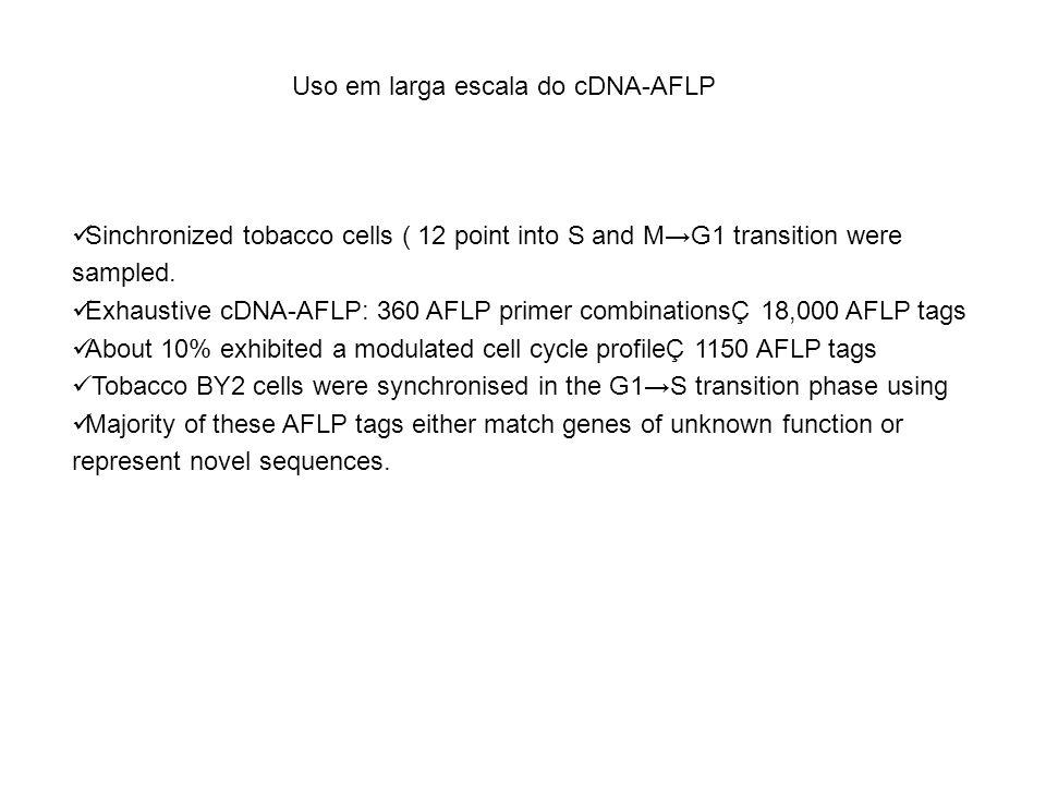 Uso em larga escala do cDNA-AFLP