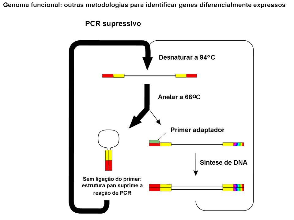 Genoma funcional: outras metodologias para identificar genes diferencialmente expressos