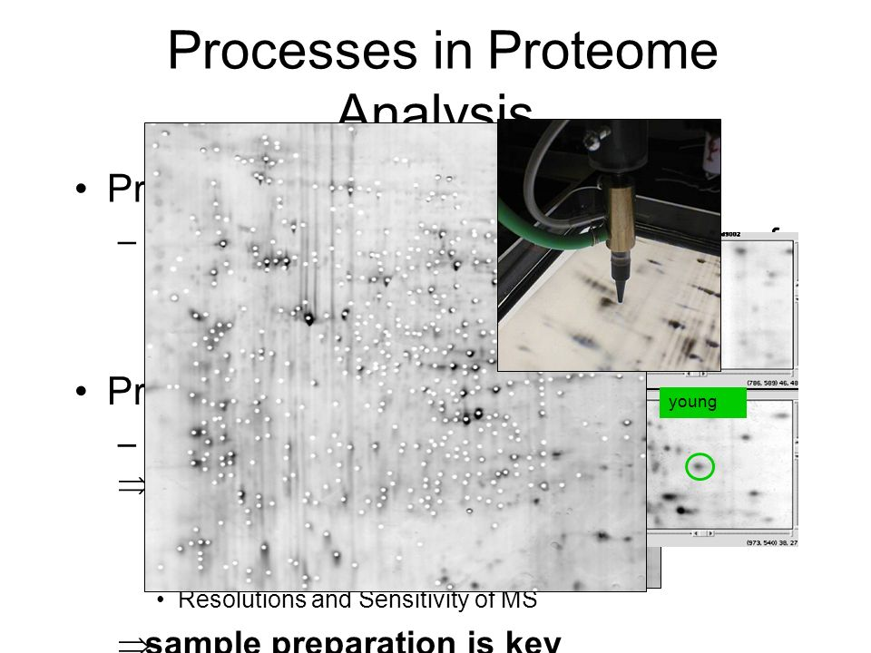 Processes in Proteome Analysis