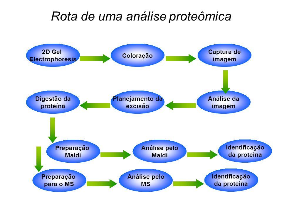 Rota de uma análise proteômica