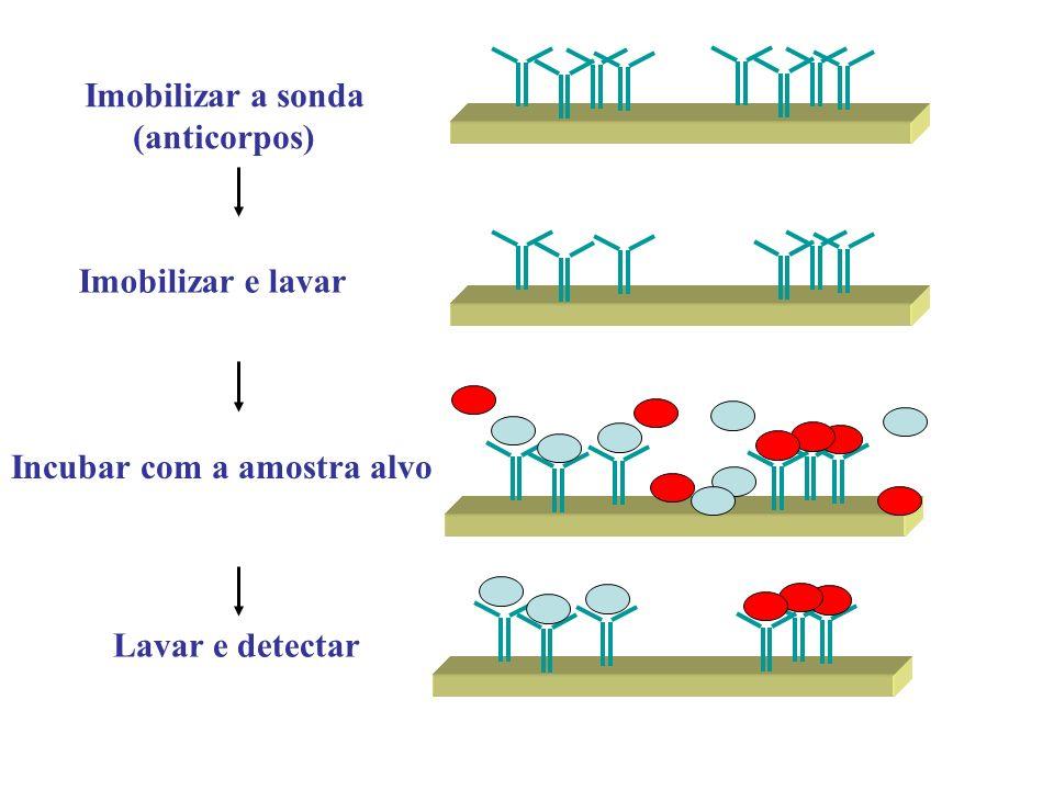 Imobilizar a sonda (anticorpos) Incubar com a amostra alvo