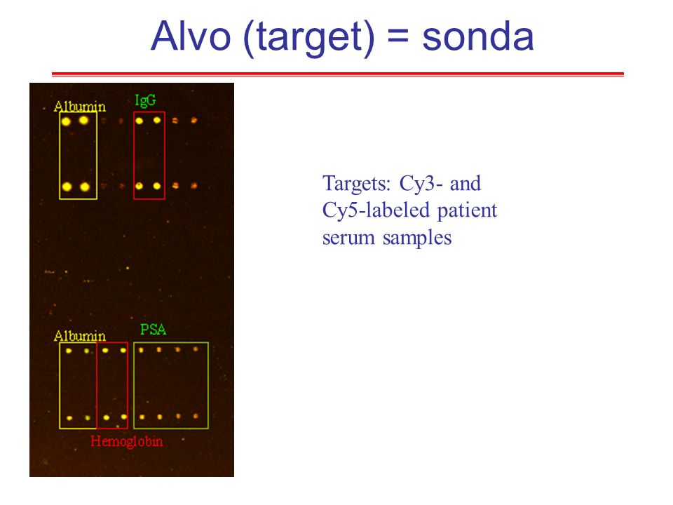 Alvo (target) = sonda Targets: Cy3- and Cy5-labeled patient serum samples