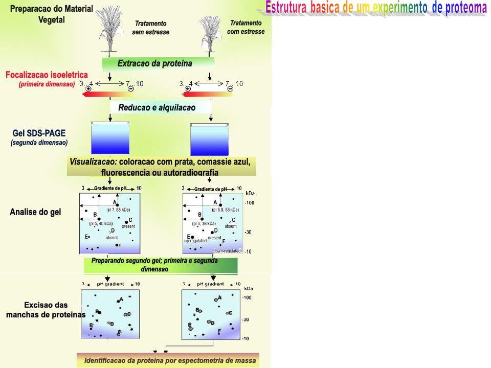 Estrutura basica de um experimento de proteoma