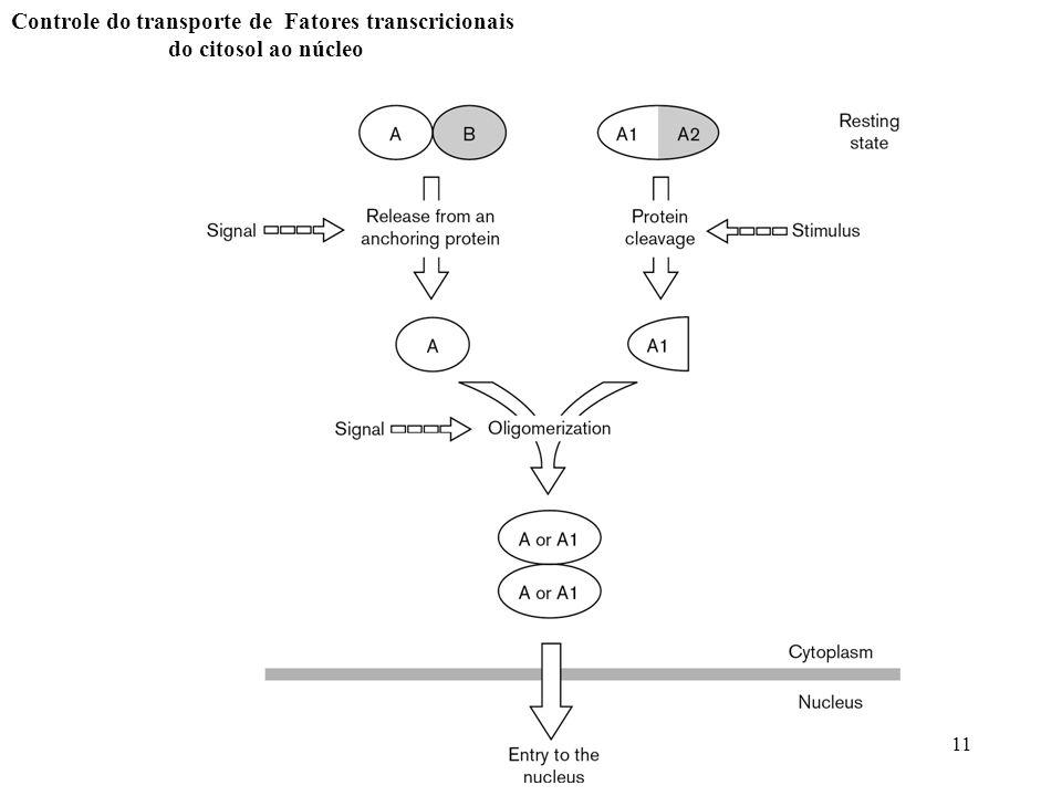 Controle do transporte de Fatores transcricionais