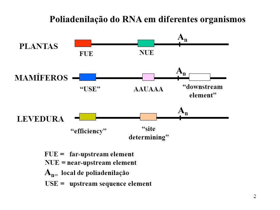 Poliadenilação do RNA em diferentes organismos