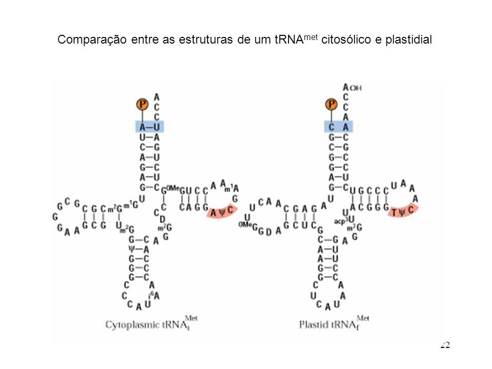 Comparação entre as estruturas de um tRNAmet citosólico e plastidial