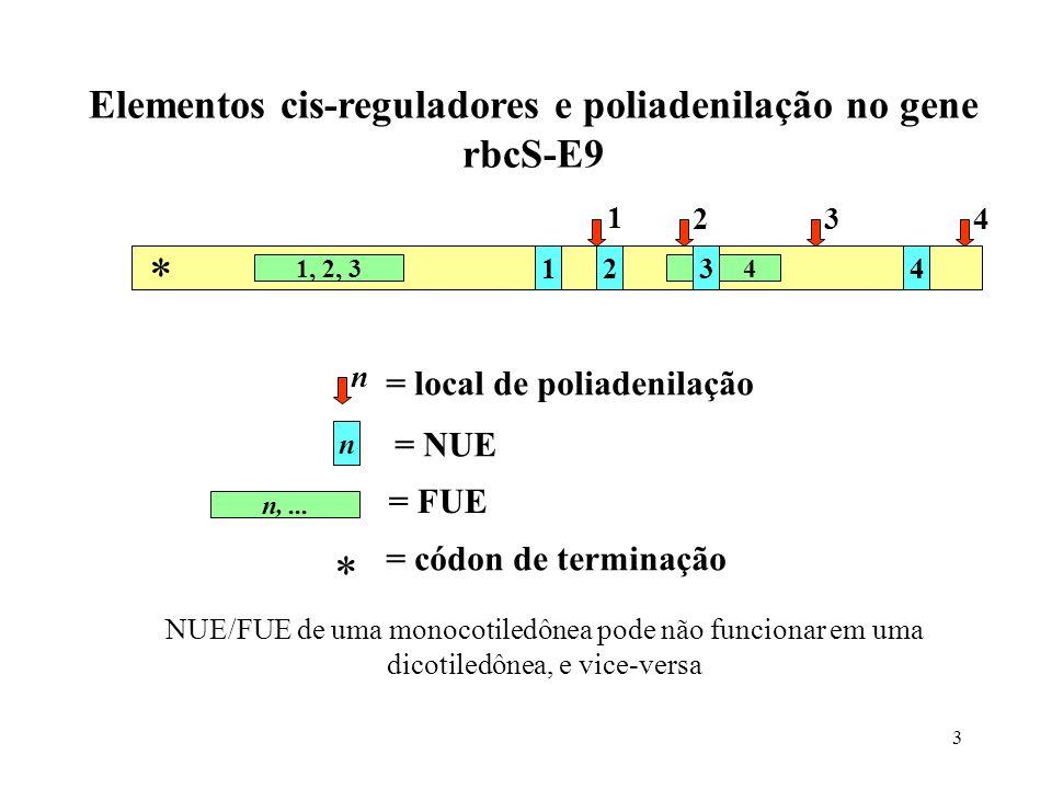 Elementos cis-reguladores e poliadenilação no gene
