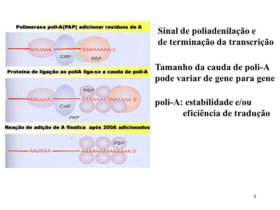 Sinal de poliadenilação e