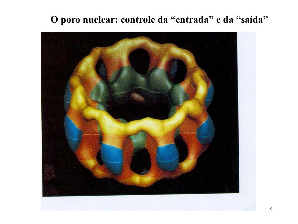 O poro nuclear: controle da entrada e da saída