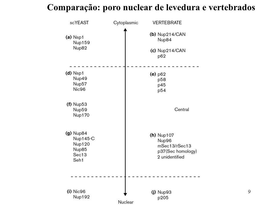 Comparação: poro nuclear de levedura e vertebrados