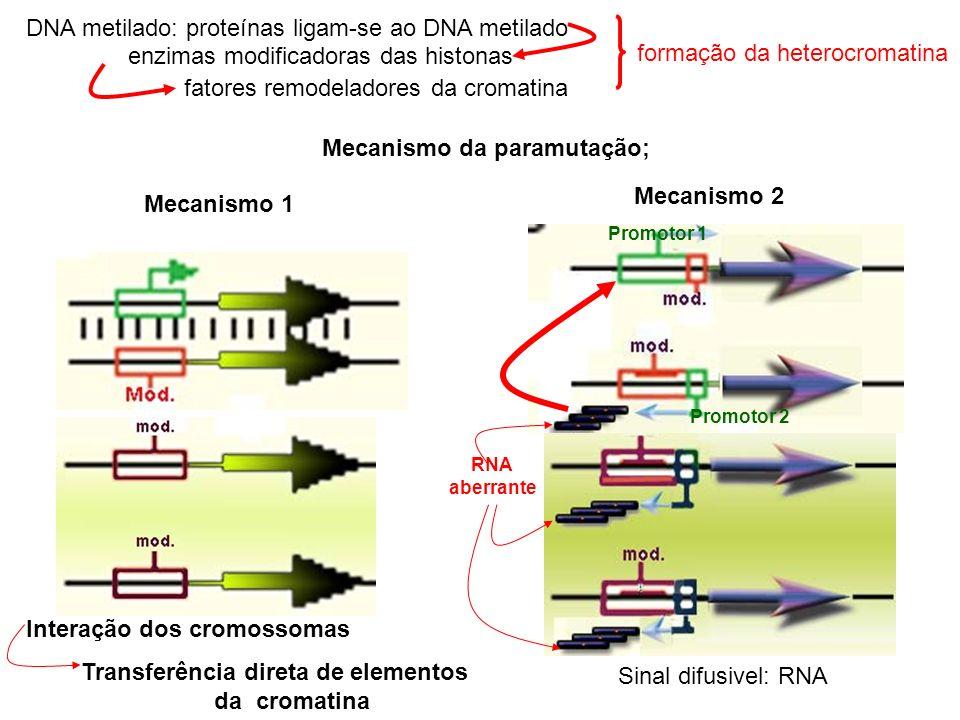 DNA metilado: proteínas ligam-se ao DNA metilado