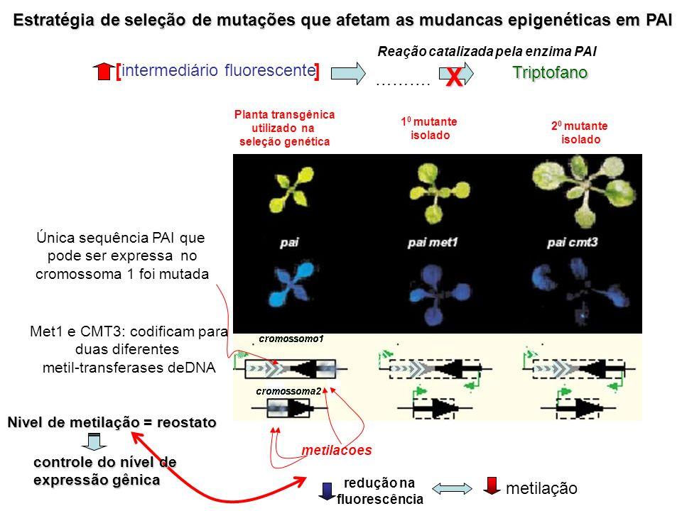 Estratégia de seleção de mutações que afetam as mudancas epigenéticas em PAI