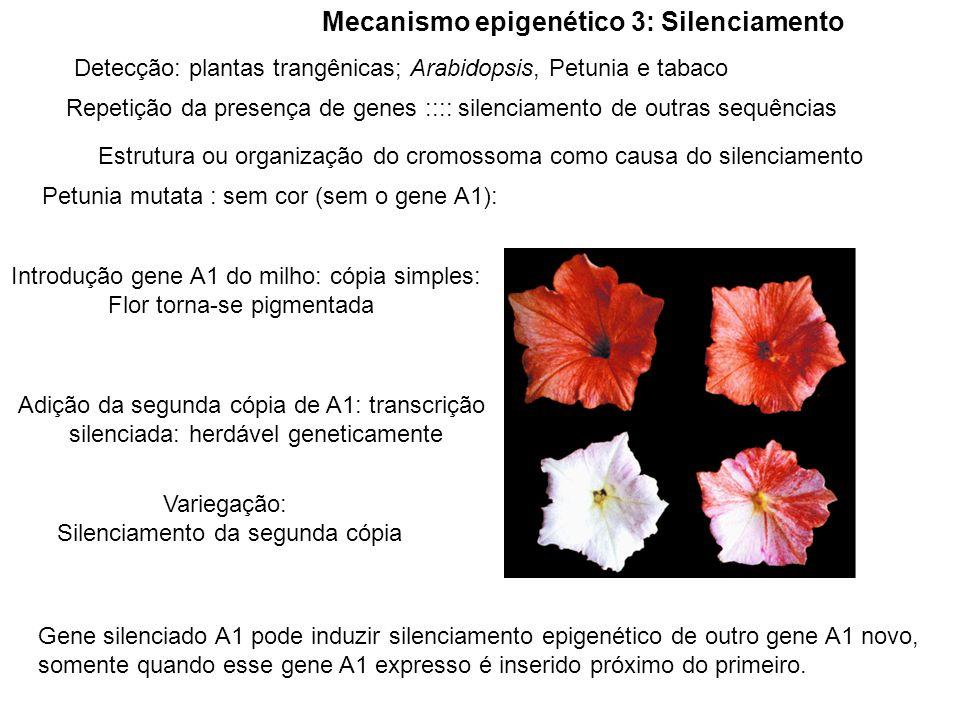 Mecanismo epigenético 3: Silenciamento