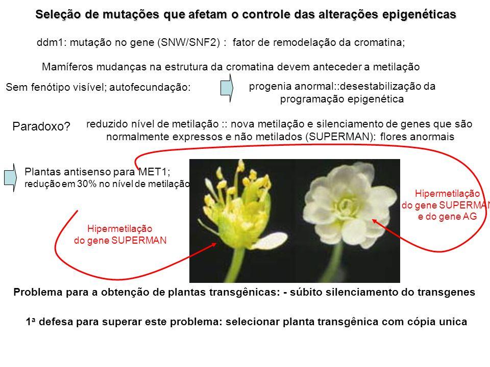 Seleção de mutações que afetam o controle das alterações epigenéticas